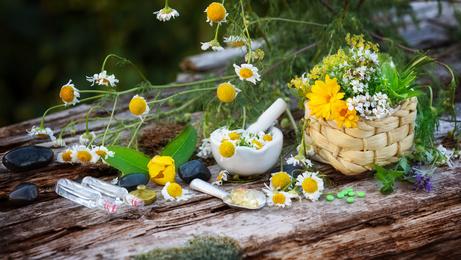 Bachblüten - die sanften Heiler