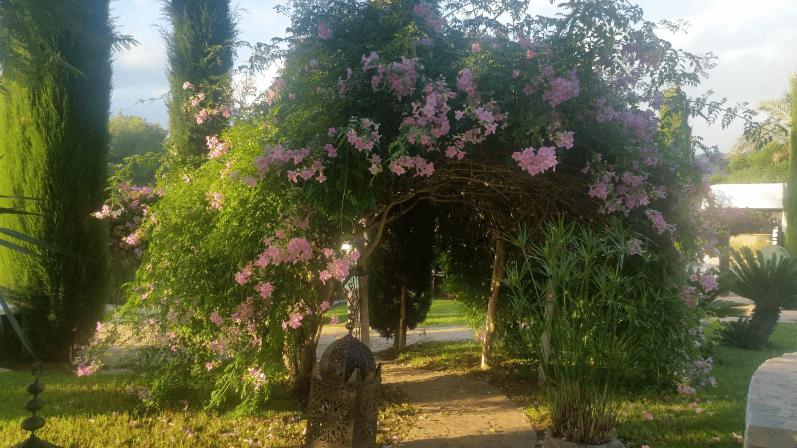 Blütenpracht im Agroturismo Atzaró