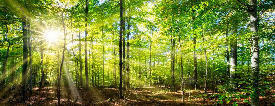 Frische Luft beim Laufen im Wald