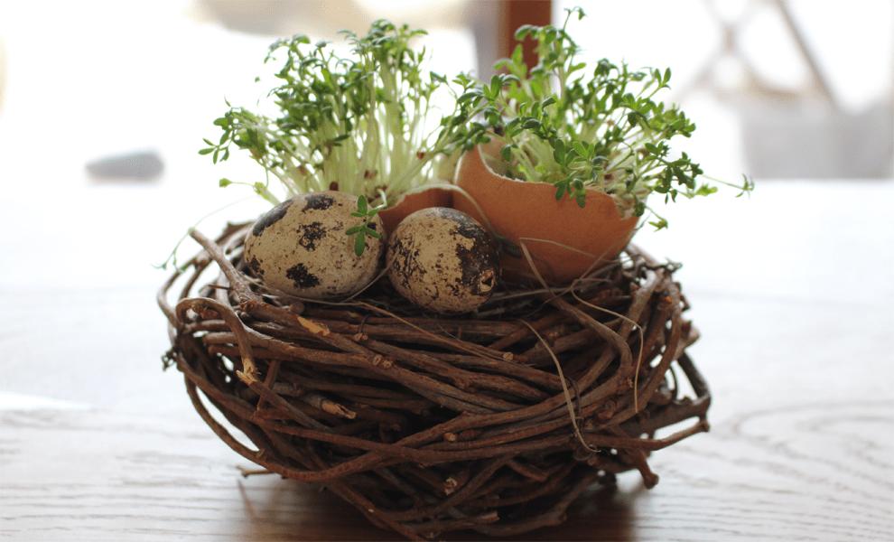 Dekorativ beim Osterbrunch: Kresse-Eier