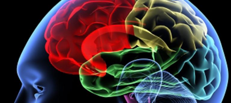 Gedächtnistraining – 5 Tipps wie du dir mehr merkst