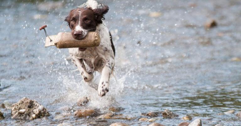 Der beste Freund des Menschen – wie ein Hund das Leben bereichert
