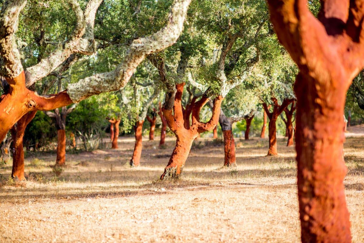 Ökosystem Korkeichenwälder
