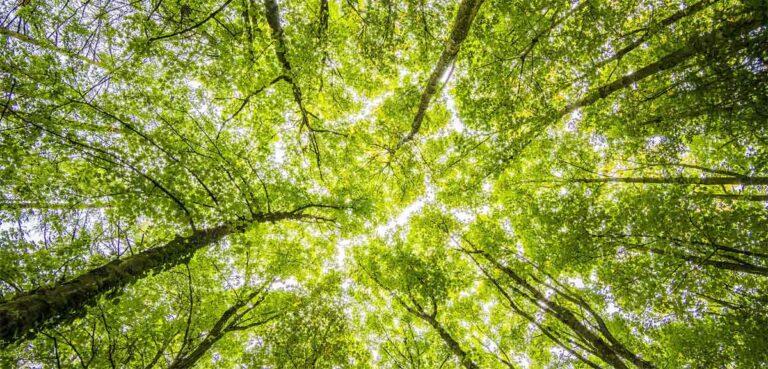 Mit nachhaltigen Geldanlagen und sozialer Verantwortung das Klima retten