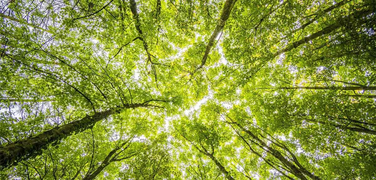 Nachhaltig investieren und Klimawandel aufhalten