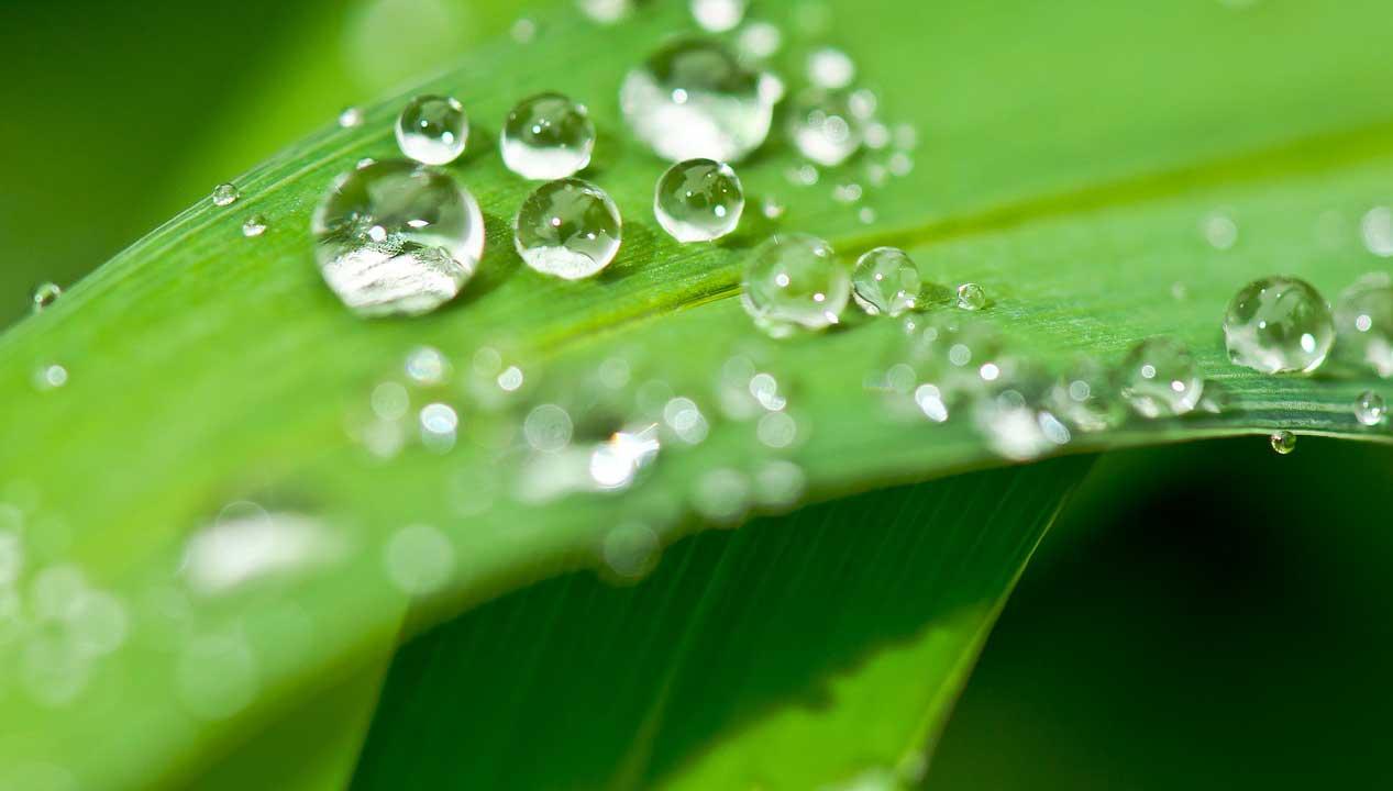 Spartipp: Regenwasser sammeln