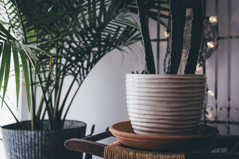 Pflanzen für ein besseres Raumklima