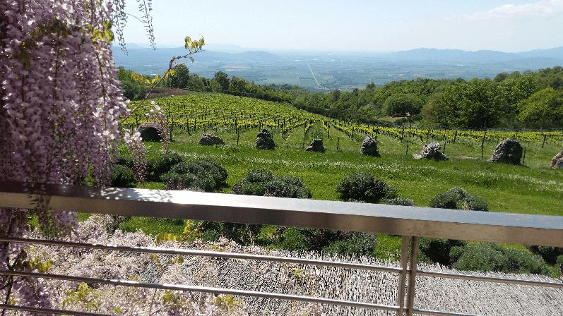 Blick auf die Weinberge und darüber hinaus